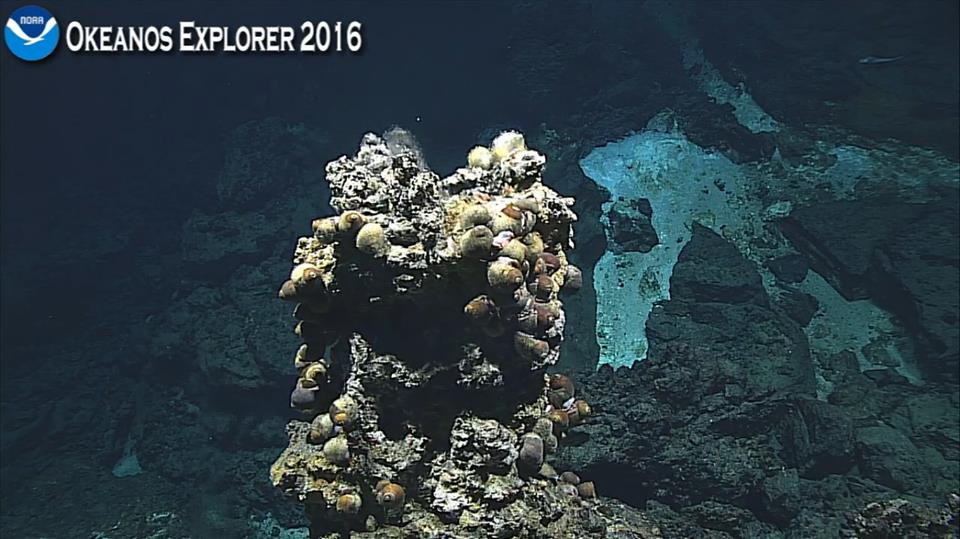 An active hydrothermal vent found at Chammoro Seamount