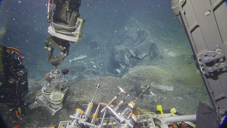 Hercules prepares to take a sediment core sample, at a newly discovered methane seep around 850 meters. These sediment cores help scientists understand the biological and chemical makeup of the seafloor. Image courtesy of Ocean Exploration Trust.